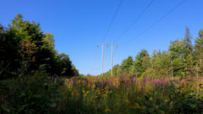 Power lines in the woods of Maine.